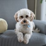 home selling with pets